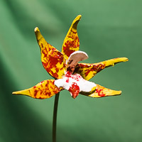 Colourful Orchids created (initially) on the lathe.
