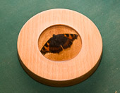 Butterfly inlay
